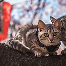 2 Cats in a Japanese Cherry Blossom Tree by TokyoLens