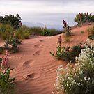Footprints of the Gardener? by Robert C Richmond