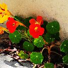friends' garden 4 by nadine henley