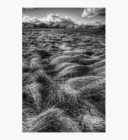Straw Flow Photographic Print