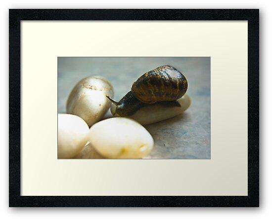 Snail #4 by Trevor Kersley