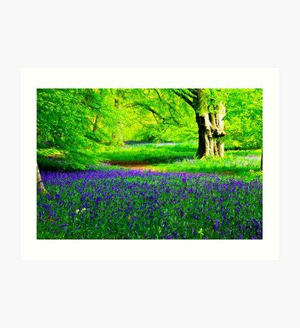 Bluebell Wood - Thorpe Perrow #2 Art Print