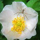 Elegance & Spider. by Vitta