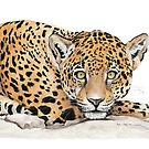 Leopard by Meaghan Roberts