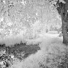 Secret Pool - Infrared by Ann Garrett