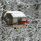 Cardinal in the Alabama Snow by DebbieCHayes