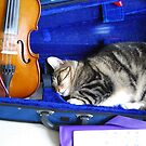 Violin and Cat by rightonian