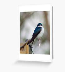Tree Swallow at Lake Ontario Greeting Card