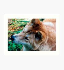 """Australian Dingo"" Art Print"