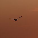 Solo Flight by mojo1160
