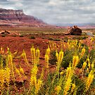 Arizona Landscape by Barbara Manis
