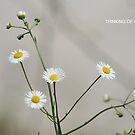 Wild Flowers by DebbieCHayes