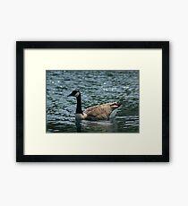 Goosey Goosey Gander, Where Shall I Wander? Framed Print