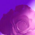 Lilac Rose by sarnia2