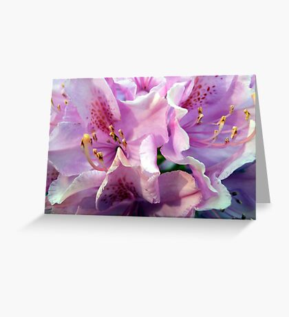Life of the rhododendron Greeting Card