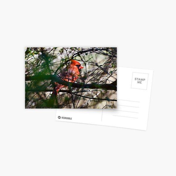 Spring Cardinal Postcard