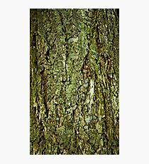 Bark in the forrest 1 Photographic Print