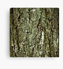 Bark in the forrest 2 Canvas Print