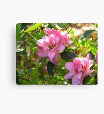 Pink Elegance Canvas Print