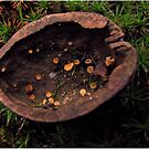° small world in the walnut shell ° by MelAncholyPhoto