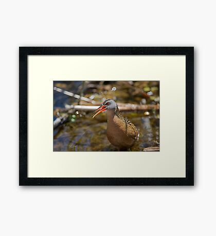Virginia Rail Framed Print