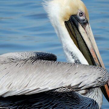 Pelican by Jathemon