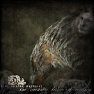 DISAPPOINTED MARMOSET - The Inevitable Failure of Existence... by IWML