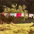 #SERIES - WEGRAAKBOSCH ORGANIC FARM - die Wäscheleine von Magriet Meintjes