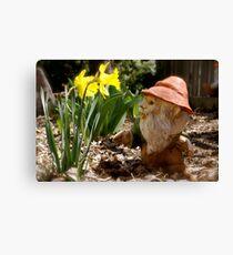 Curious Daffodils Canvas Print