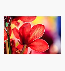 Red Orchid Macro Photographic Print
