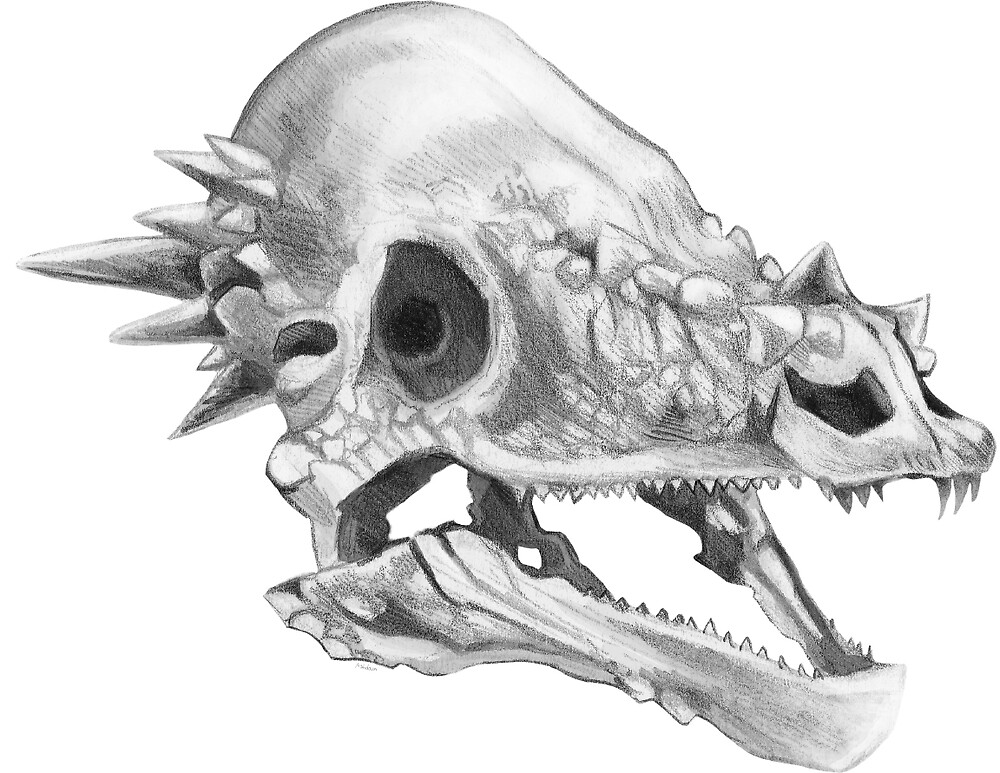 Pachycephalosaurus skull by Ashley Dadoun