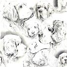 Clumber Spaniels by Jan Irving black and white by JAN IRVING
