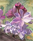 Lilac Blossom by Ken Powers