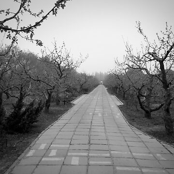Winter Orchard - Beijing by tenfour
