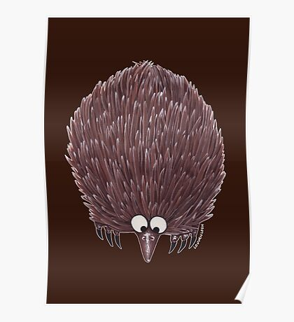 Echidna Brown Poster