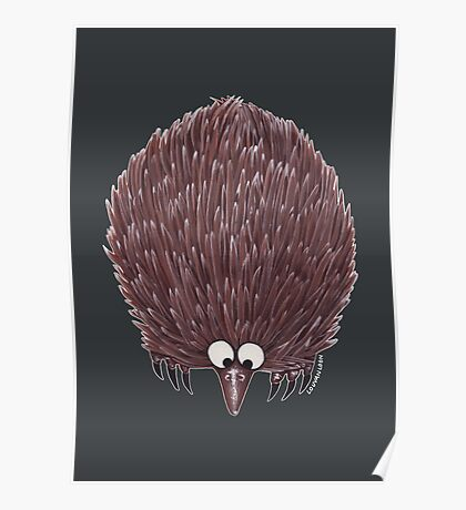 Echidna Grey Poster