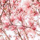 Magnolias Jamming by Philippe Sainte-Laudy