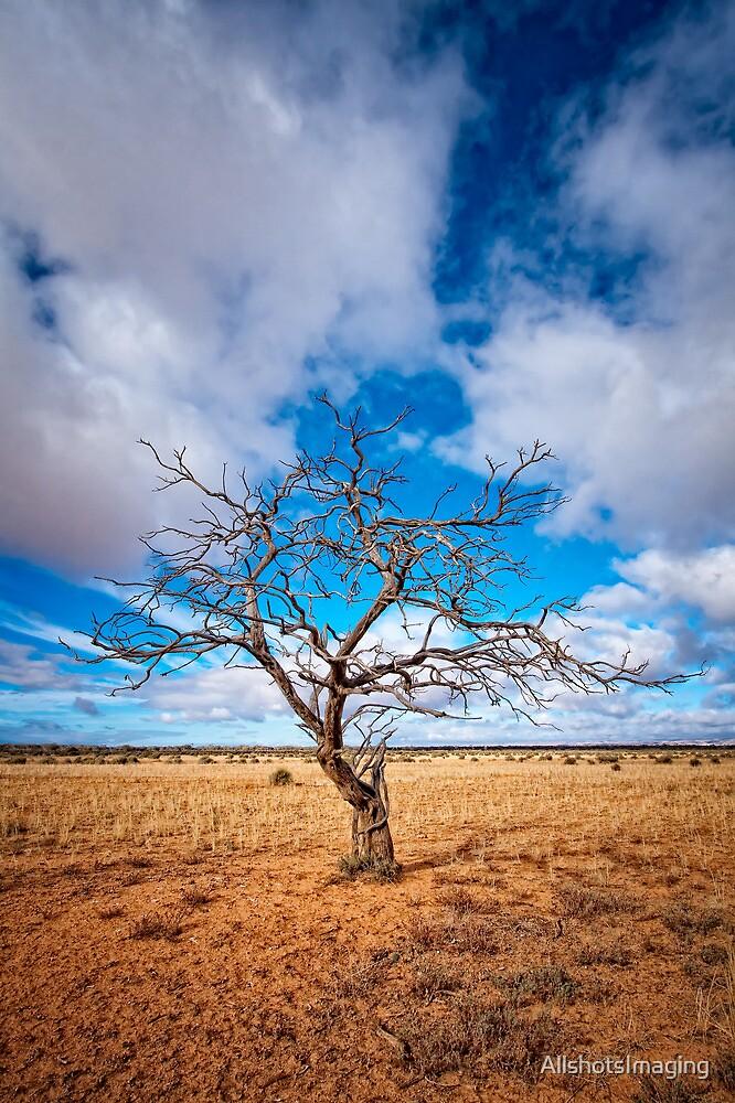 Lonely Tree at Steinfeld - South Australia by AllshotsImaging