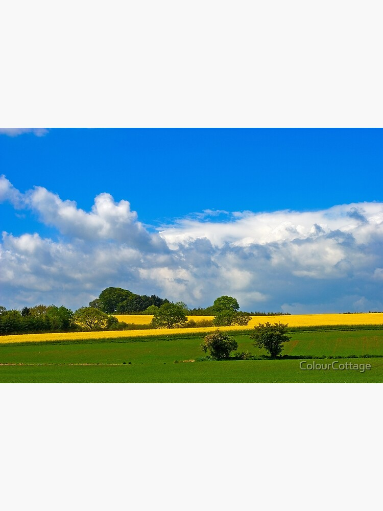 Summer fields 1 by ColourCottage