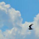 Caspian Tern by Dawne Dunton