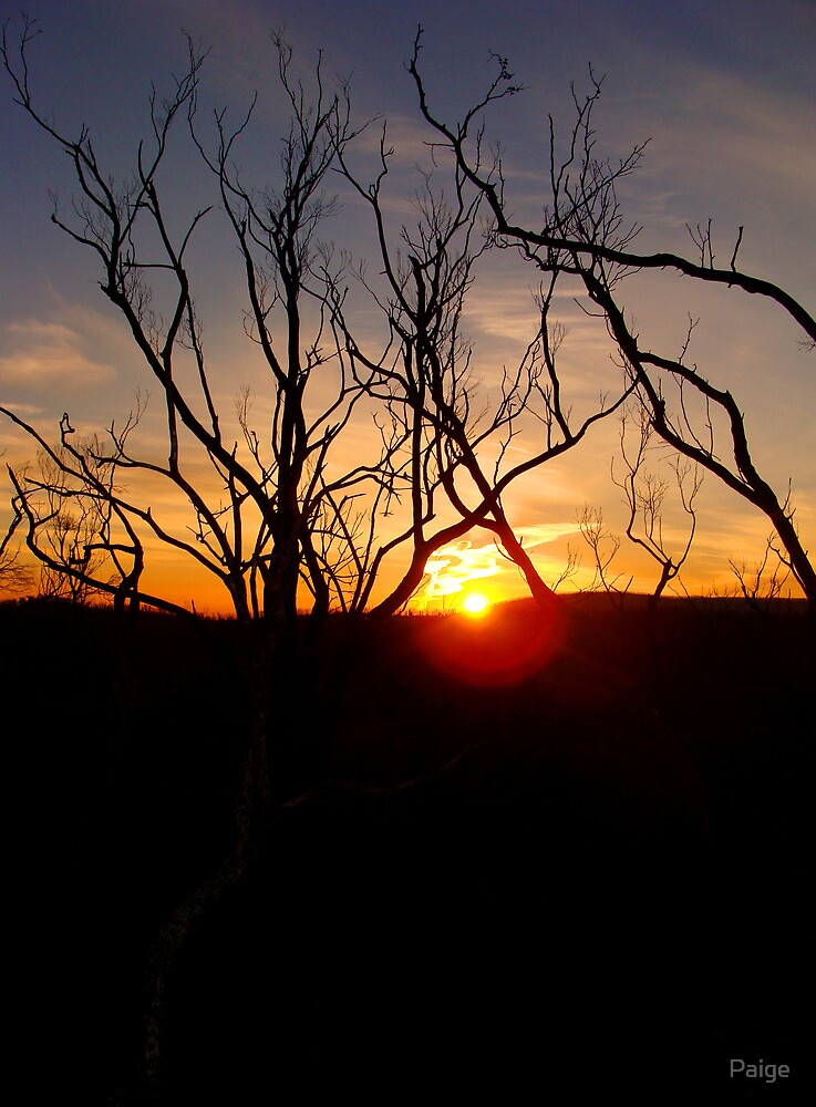 Sunset through the twigs by Paige