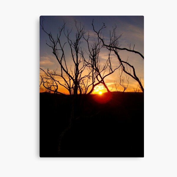 Sunset through the twigs Canvas Print