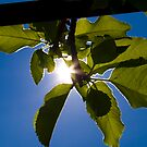 Embracing the Sunshine of Spring. by JLaverty