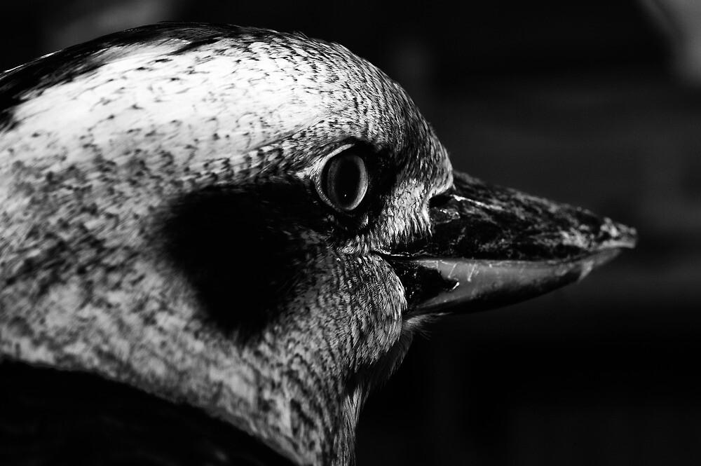 Kookaburra by Craig Hender