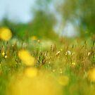 Meadow by FraserJ