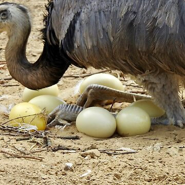 Greater Rhea and her eggs by martina