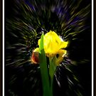 Yellow Iris I by Cathy O. Lewis