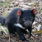 Tasmanian Devil by Meaghan Roberts