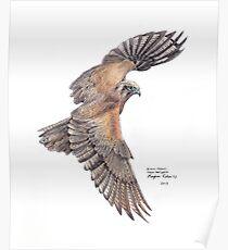 Brown Falcon Poster