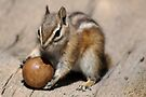 Play Ball by Betsy  Seeton